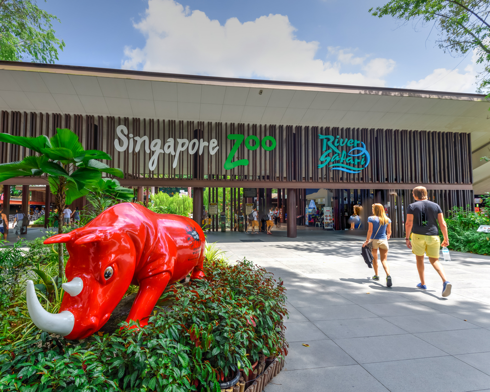 Rhino at front of singapore zoo
