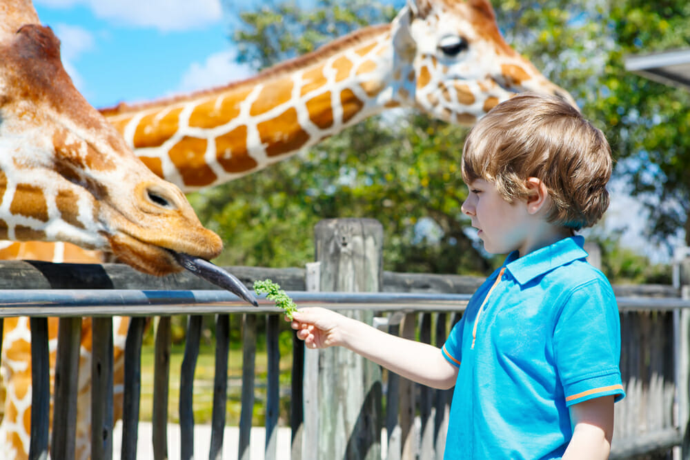Sydney Zoo Competition