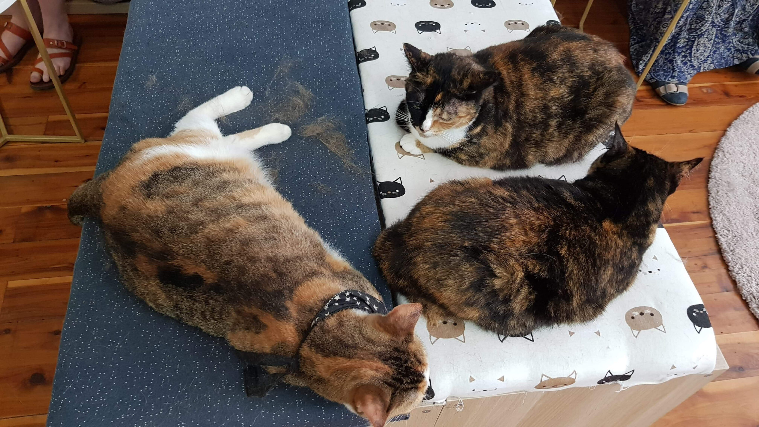 lazy cats at Catmosphere sydney
