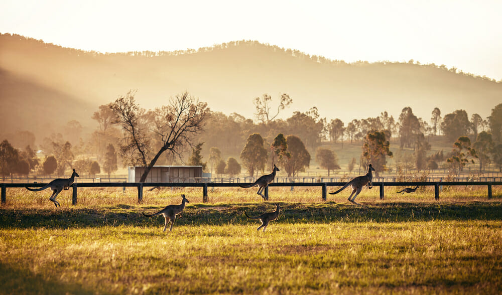 The Hunter Valley New South Wales, Australia.