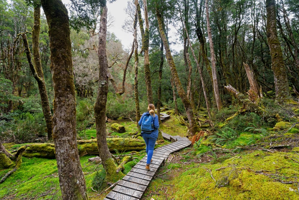 hiker on the overland track, cradle mountain national park