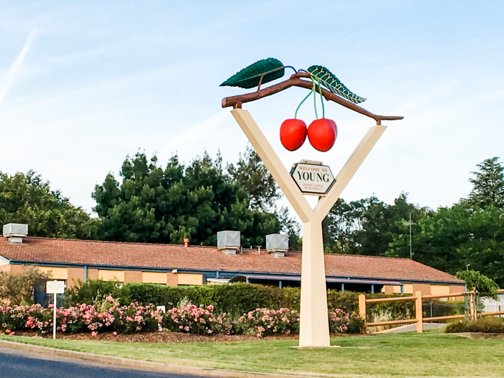 big cherries in Young NSW