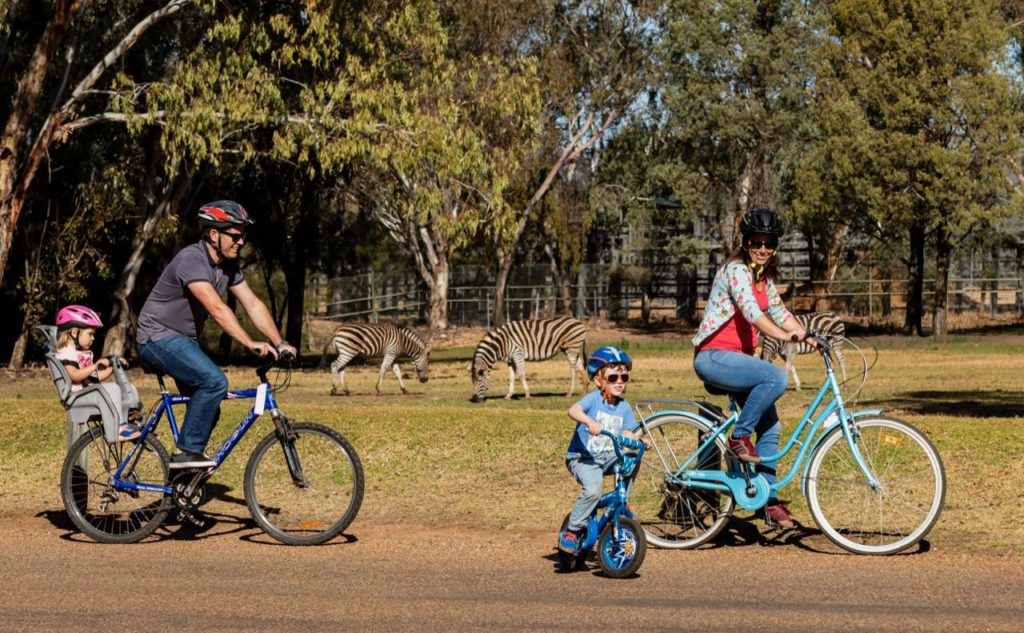 family riding their bicycles around Dubbo Zoo with zebras in the background