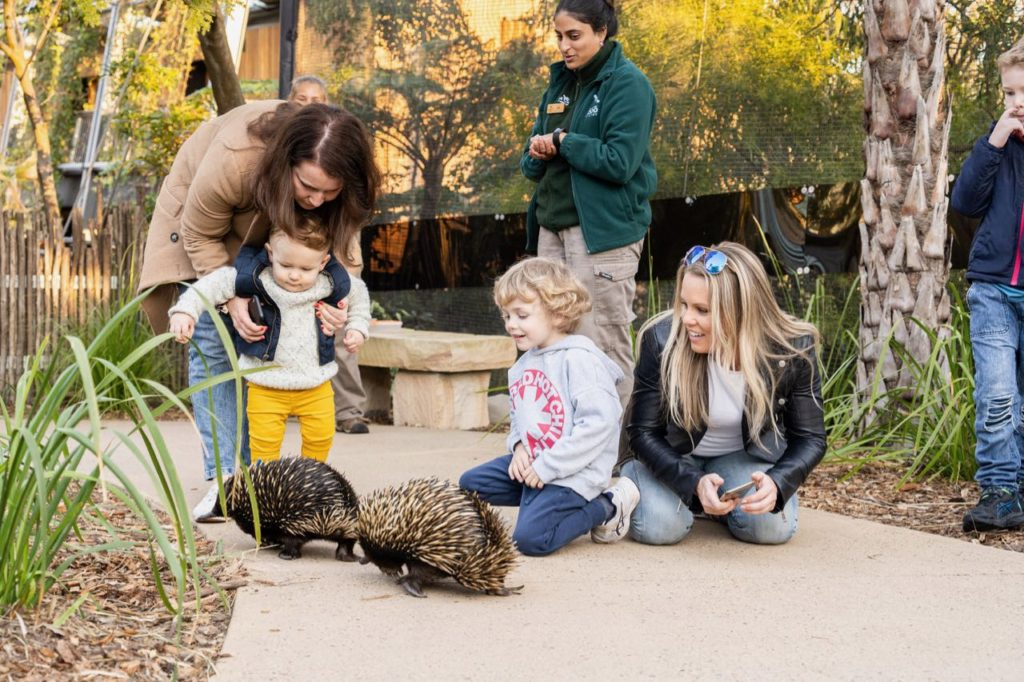 young children watch two echidnas closely in The Sanctuary at The Wildlife Retreat Taronga Zoo