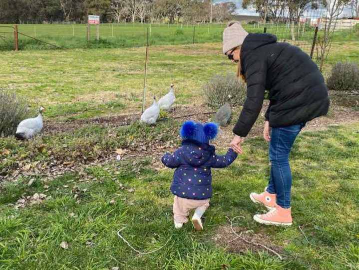 mother and toddler chasing chicked at Heifer Station Wines in Orange, NSW
