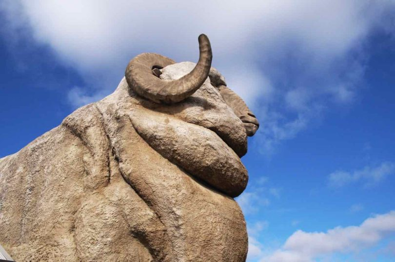 The Big Merino standing at 15.2 metres tall located in Goulburn.