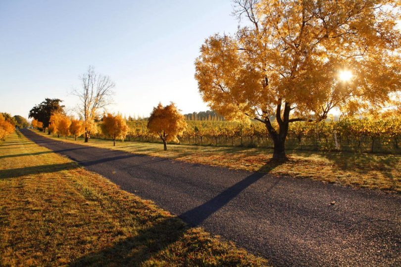 A road running through an orchard in Orange during autumn,